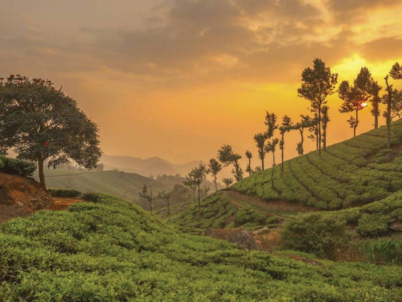 How many days trip is good for Munnar & Mistakes to Avoid