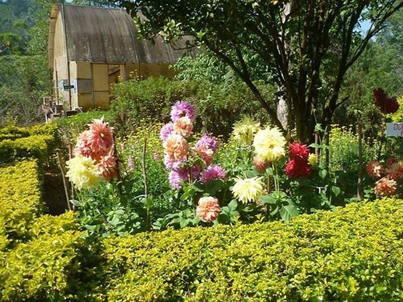 blossom-park-munnar