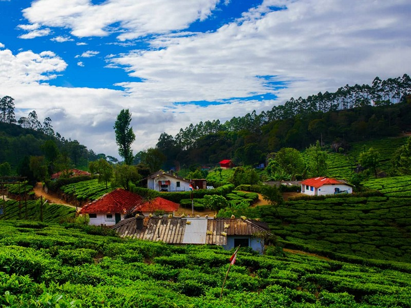 15 Must Visit Munnar Tourism Attractions for Sightseeing in Munnar